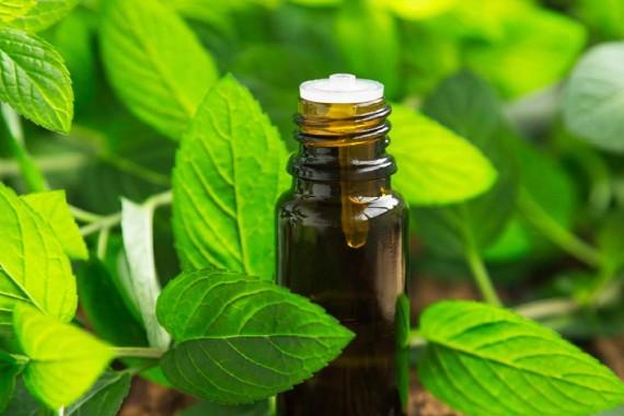 Oli essenziali: proprietà e come usarli