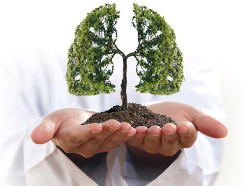 Ecobiodepuratori d'aria: le piante!