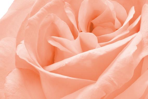 Olio di Rosa Mosqueta: tutto quello che c'è da sapere