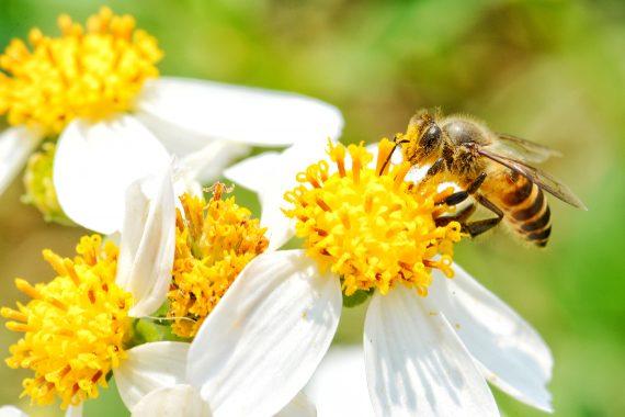 Le api: amiche pungenti!